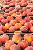Peaches in trays on display Stock Photo