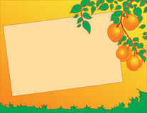 Peaches on a tree. Vector illustration of peaches on a tree in the background Stock Photography