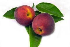 Peaches on white Stock Photography