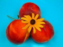 Peachy дни лета Стоковое Изображение