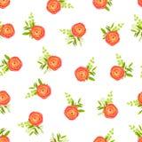 Peachy цветки лютика и белая предпосылка Стоковое Изображение