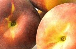 peachy Στοκ Εικόνες