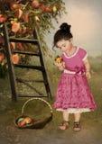 Peachy garden Stock Photos