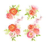 Peachy roses, ranunculus and  herbs bouquets vector design Stock Photos
