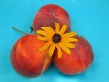 Peachy Summer Days Stock Photos