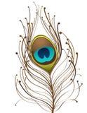 Peackok feather