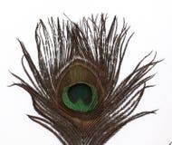 peacock φτερό στοκ φωτογραφίες