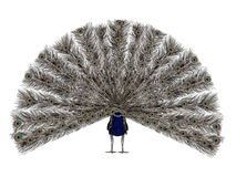 Peacock. A peacock displaying its beautiful feathers from a back view Stock Image