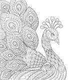Peacock. Adult antistress coloring page. Black and white hand drawn doodle for coloring book. Vector illustration Royalty Free Stock Image