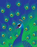 Peacock background Royalty Free Stock Images