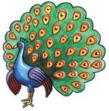Peacock bird Royalty Free Stock Photos