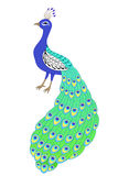 Peacock bird blue green yellow isolated illustration Stock Images