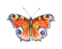Peacock butterflies on a white background. Watercolor drawing. Insects art. Handwork Stock Photography