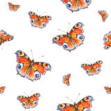 Peacock butterflies on a white background. Watercolor drawing. Insects art. Handwork.  Royalty Free Stock Photography