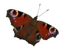 Peacock Butterfly Stock Photo