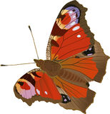 Peacock butterfly. Drawing butterflies with the opened wings. Inachis io (lat Stock Photo