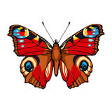 Peacock butterfly. Hand drawn vector illustration Royalty Free Stock Images