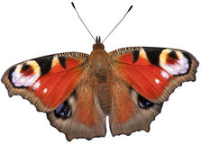 Peacock butterfly isolated Royalty Free Stock Photo