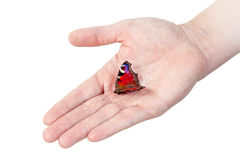 Peacock butterfly on man's hand. Royalty Free Stock Photos