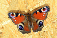 Peacock butterfly resting on plywood background Stock Image