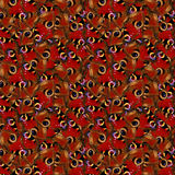 Peacock butterfly seamless pattern Stock Image