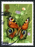 Peacock Butterfly UK Postage Stamp Royalty Free Stock Image