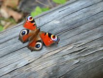 Peacock butterfly on the wood Stock Images