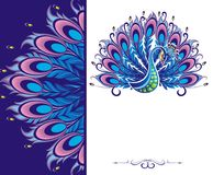 Peacock card Royalty Free Stock Photos