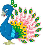 Peacock cartoon posing Stock Photography