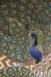 Peacock decoration in City Palace, Jaipur Royalty Free Stock Photos