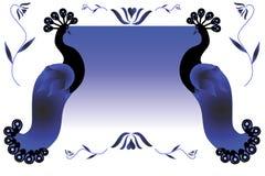 Peacock Design Elements Stock Photo