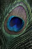Peacock eye Royalty Free Stock Photo