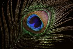 The peacock eye 4 Stock Images