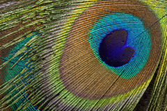 Peacock eye background stock images