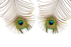 Peacock Eyes. Two iridescent peacock feathers featuring the eyes, over white background Royalty Free Stock Photos