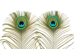 Peacock Eyes Stock Image