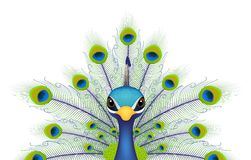 Peacock face isolated on white Stock Images
