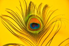 Peacock feather. A colorful peacock feather in a yellow background Royalty Free Stock Photo