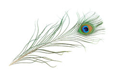 Free Peacock Feather Royalty Free Stock Photo - 10560715