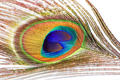 Peacock feather Royalty Free Stock Photos