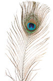 Peacock feather royalty free stock images