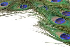 Peacock Feather Stock Photos
