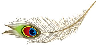 Peacock feather. The peacock feather in royalty free illustration