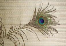 Free Peacock Feather Stock Photos - 16505813