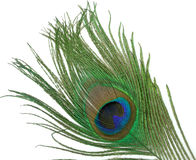 Peacock feather. Detail of a peacock feather Stock Image