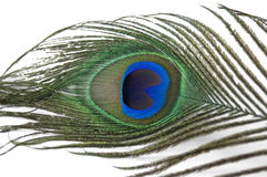 Peacock Feather. The Eye of Peacock Feather. Centered to the middle of the eye Royalty Free Stock Photos