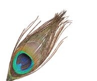 Peacock feather Royalty Free Stock Photography