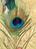 Peacock feather. Holding a peacock feather in india Stock Photo