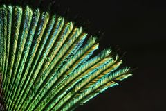 Peacock Feather. A macro photograph (close up) of a detail of a peacock feather Stock Photos