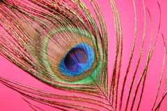Peacock feather. Macro shot of a beautiful peacock feather Royalty Free Stock Photo